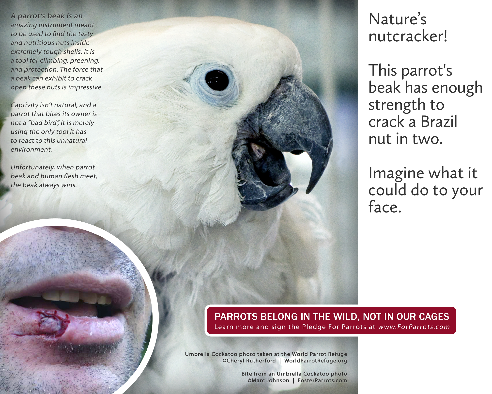 cockatoo bite for parrots posters for parrot advocates