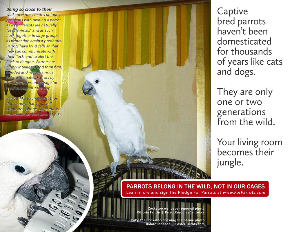 wallpaper removal services for parrots posters for